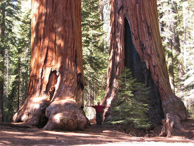 sequoia-g2
