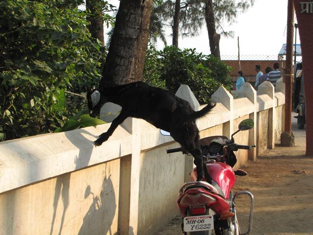 India2_Alibag_11