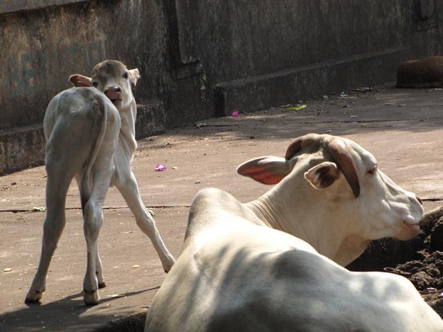 India2_Goa_10