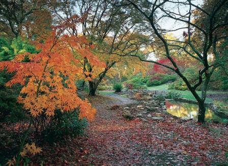 exbury_gardens_autumn_600x