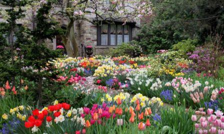 patio-de-tulipanes-668x400x80xX