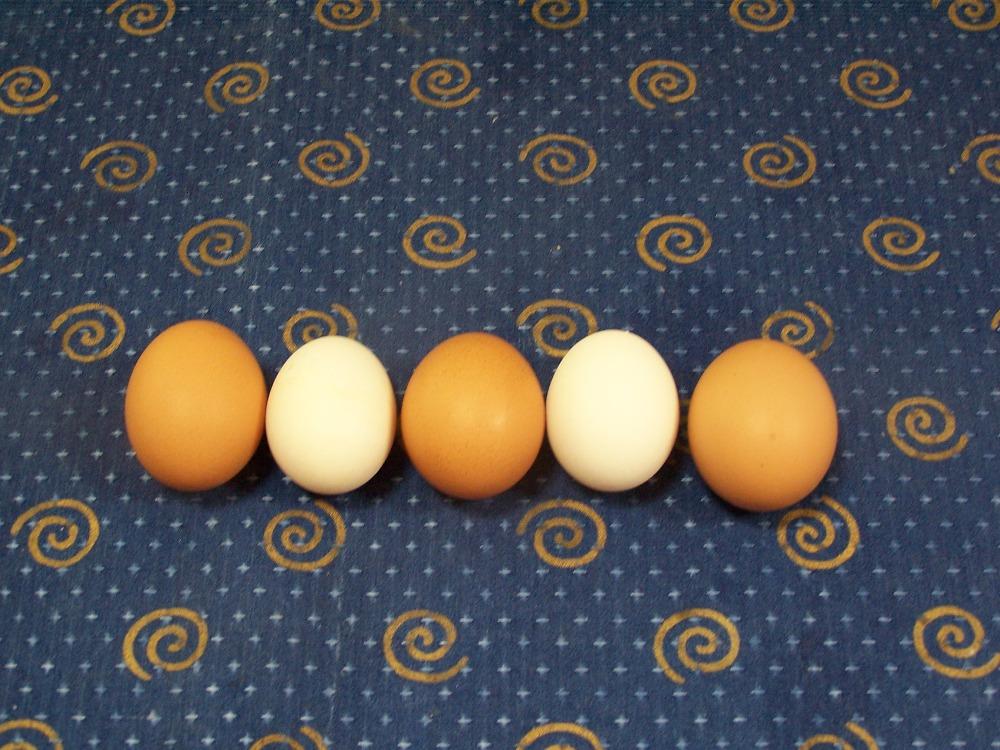 tojások sorban