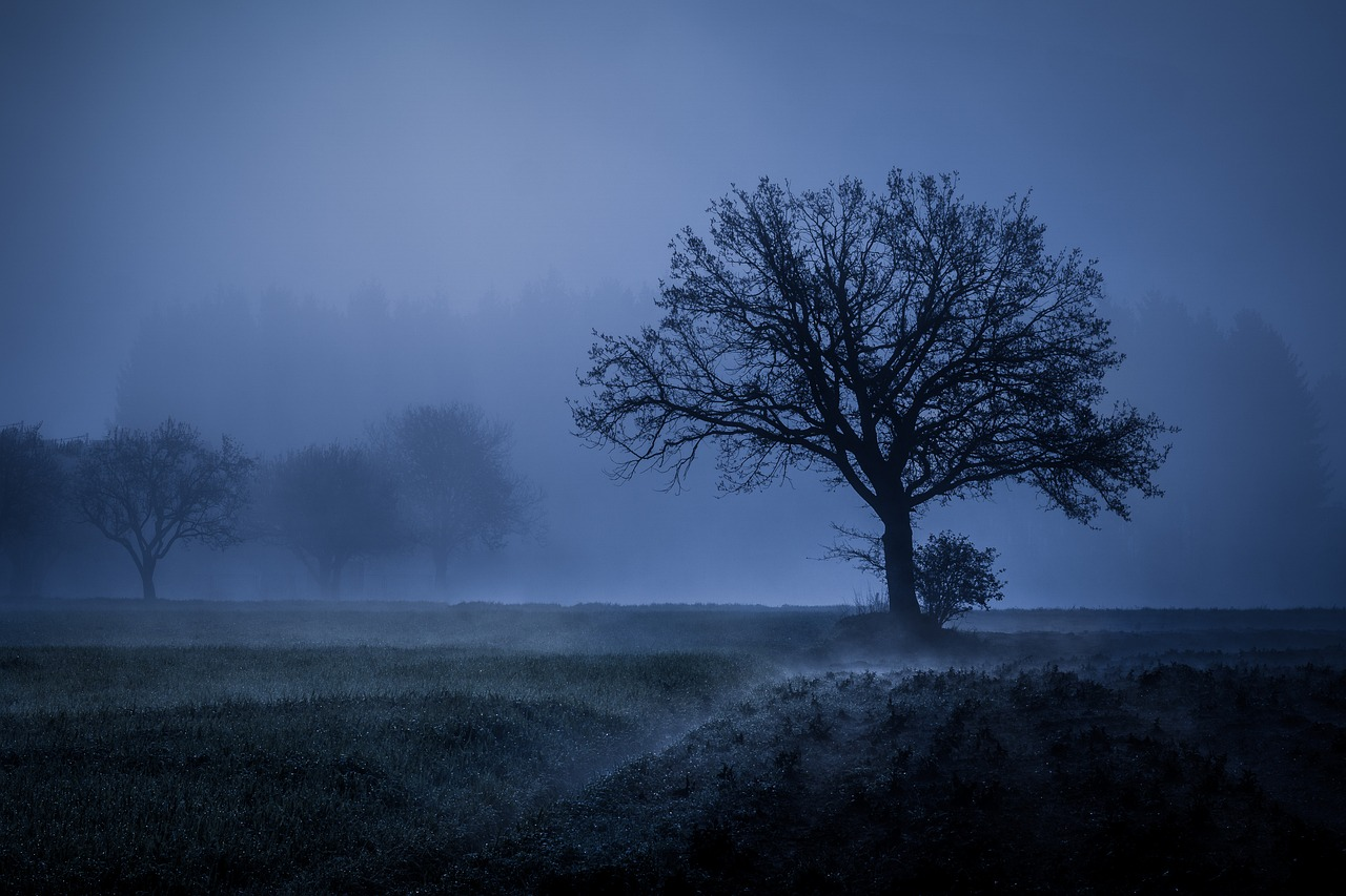 tree-2976739_1280